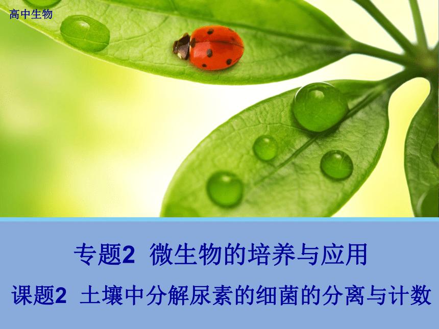 高中生物人教版选修1专题2课题2.2 土壤中分解尿素的细菌的分离与计数 (共30张ppt)