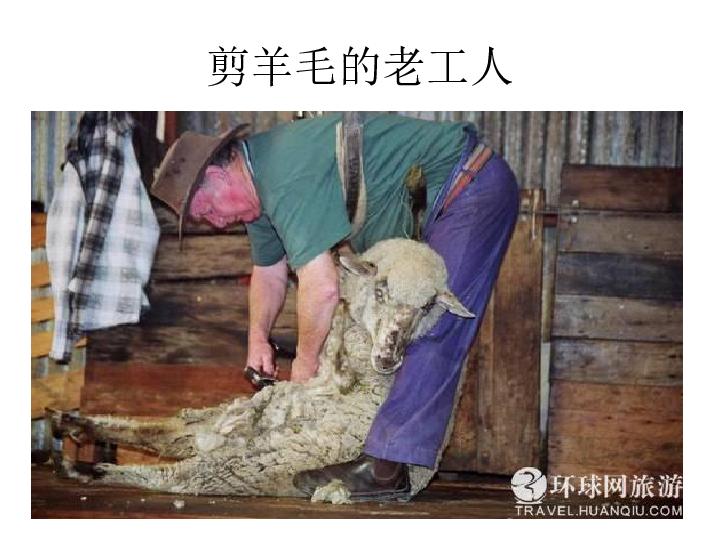 剪羊毛 课件 (1)