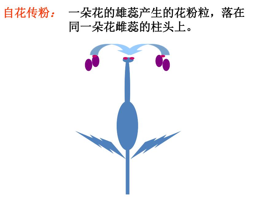 2021-2022学年人教版七年级生物上册3.2.3 开花和结果  课件(共31张PPT)