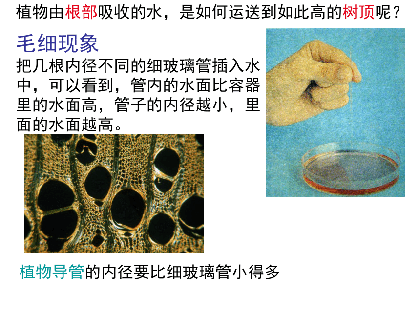 4.5 植物的叶与蒸腾作用 课件(33张PPT)