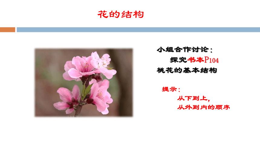 3.2.3开花与结果课件(22张PPT)