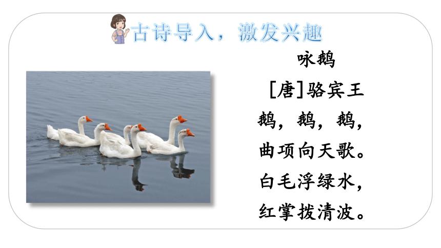 15 白鹅   课件(2课时 29张ppt)