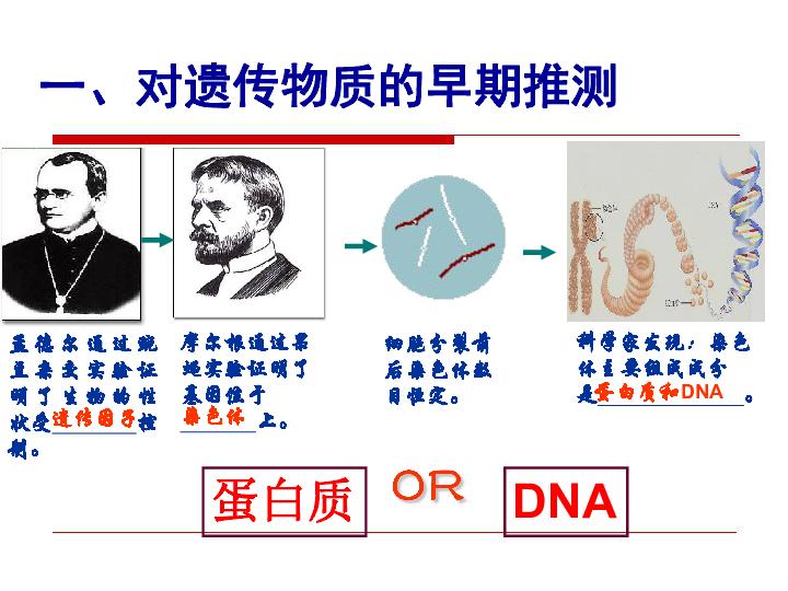人教版必修2高中生物3.1 DNA是主要的遗传物质(25张PPT)