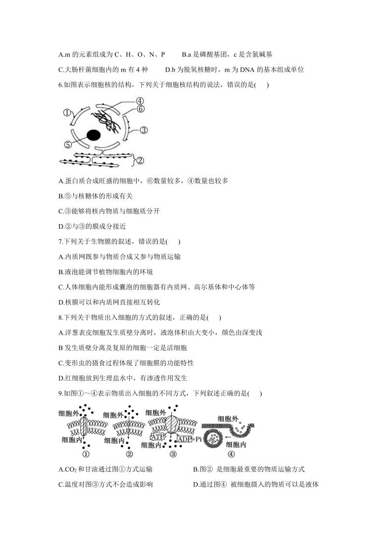 内蒙古自治区乌兰察布市集宁区2020-2021学年高二下学期期末考试生物试题( Word版含答案)