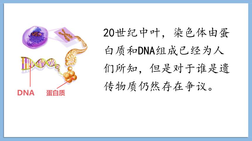 3.1DNA是主要的遗传物质课件2020-2021学年高一生物人教版必修二(26张PPT)
