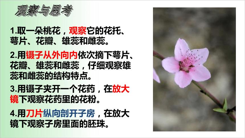 2021——2022学年人教版七年级生物上册3.2.3开花和结果 课件(20张PPT)
