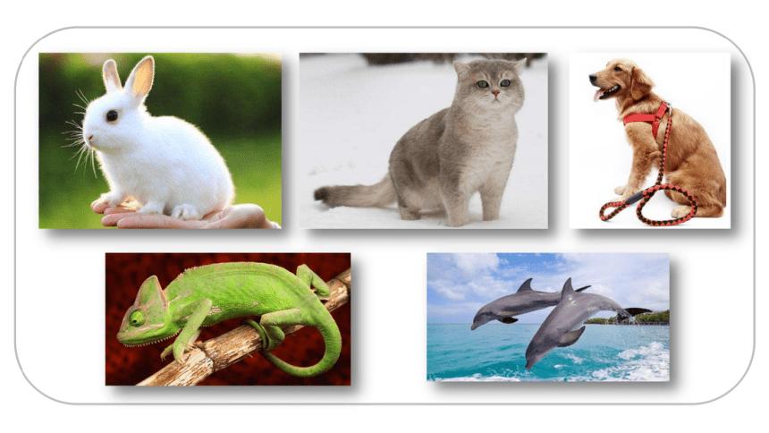 部编版四年级语文下册 第四单元  习作:我的动物朋友   课件(2课时  49张ppt)