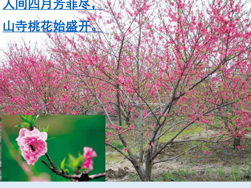 人教版七年级生物 上册 第三单元 第二章 第三节 开花和结果 课件(共53张PPT)