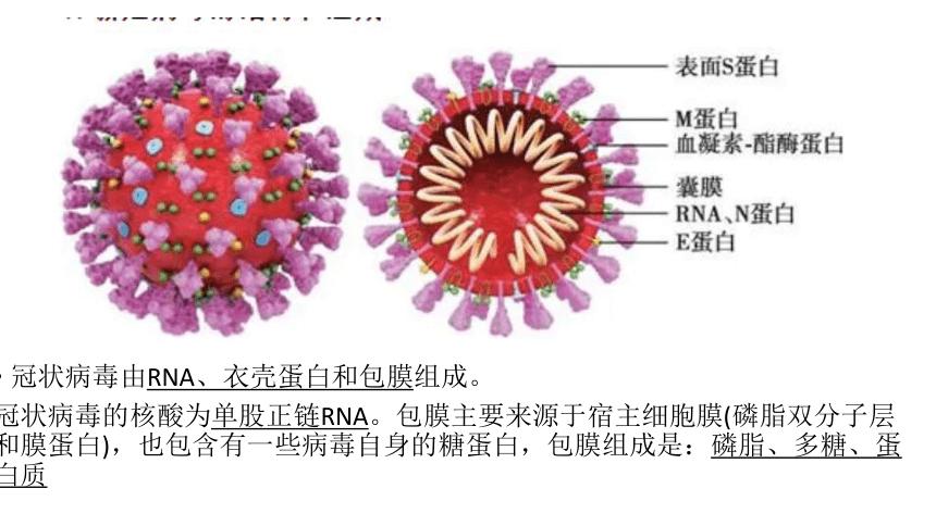 2021届高考冲刺专题复习新冠病毒为载体的知识  (17张PPT)