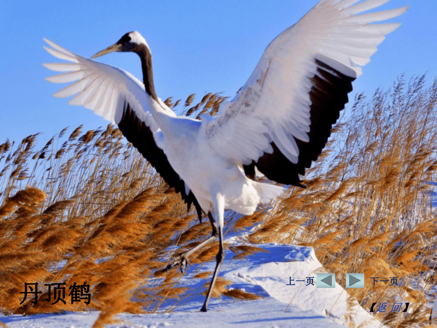 冀美版 一年级下册美术 第7课 美丽的鸟|课件(15张PPT)