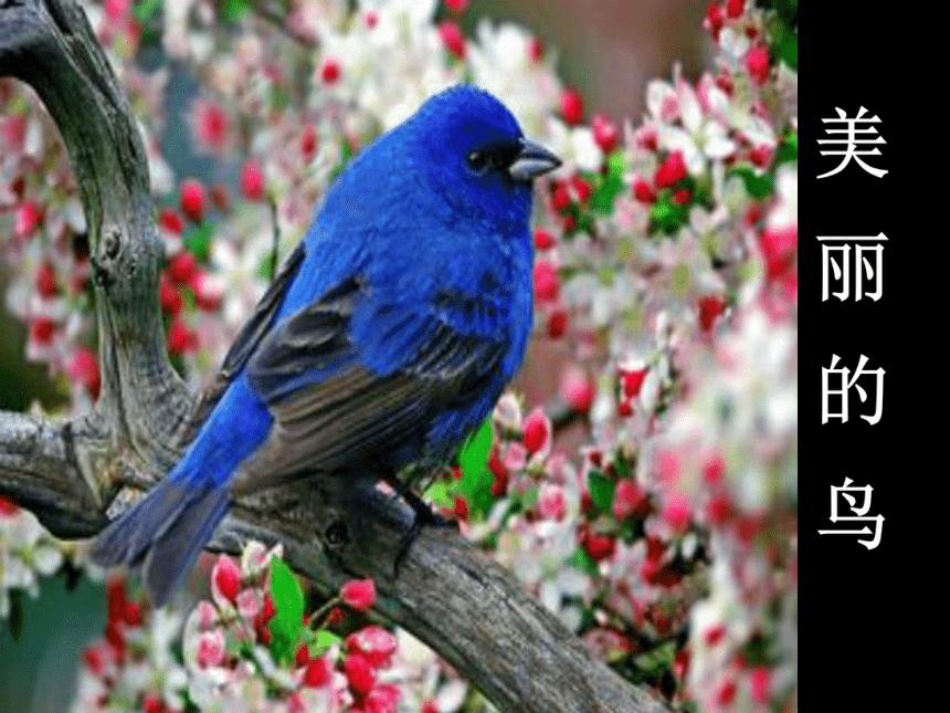 冀美版 一年级下册美术 第7课 美丽的鸟|课件(17张PPT)