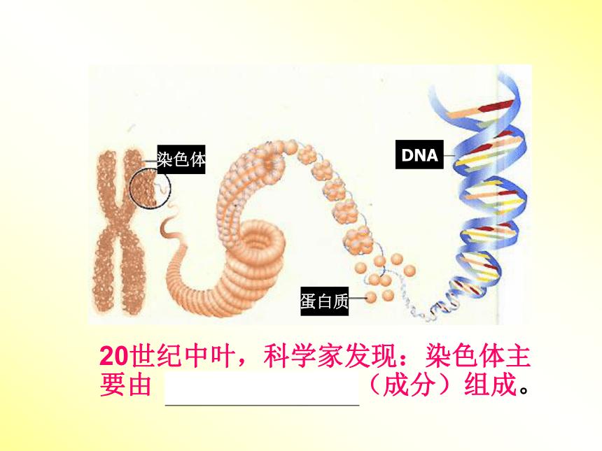人教版高中生物必修二3.1.DNA是主要的遗传物质 课件(52张ppt)
