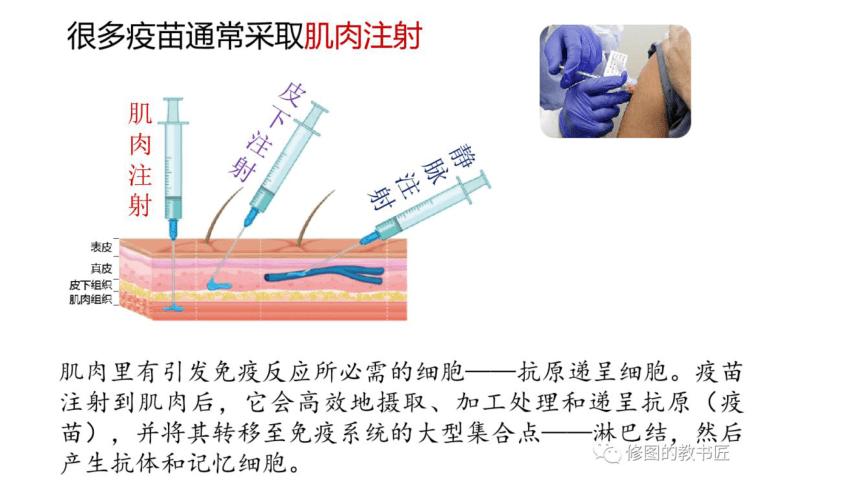 2021届高考冲刺专题复习疫苗专题课件(33张PPT)