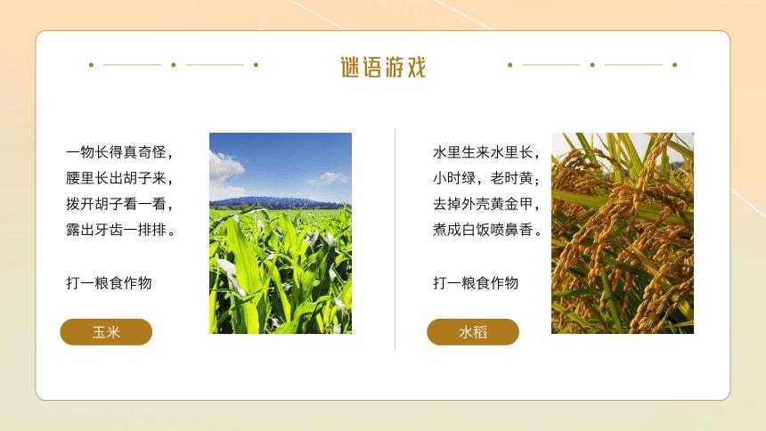 节约粮食爱惜粮食 课件( 22张PPT)