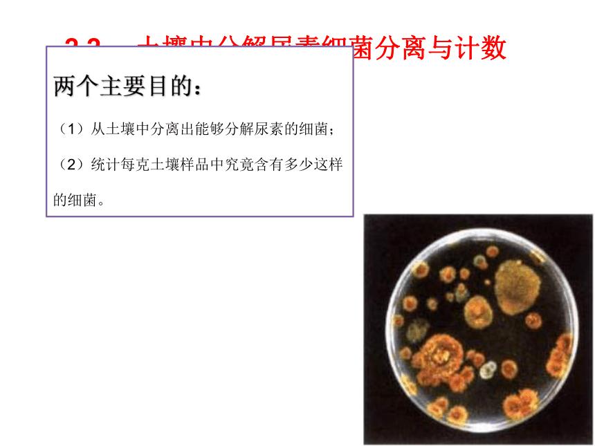高中生物选修1-人教版-2.2土壤中分解尿素的细菌的分离与计数(20张PPT)