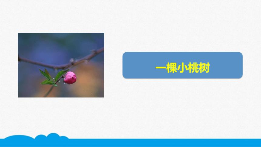 初语部编版七下 第19课 一棵小桃树 微课课件