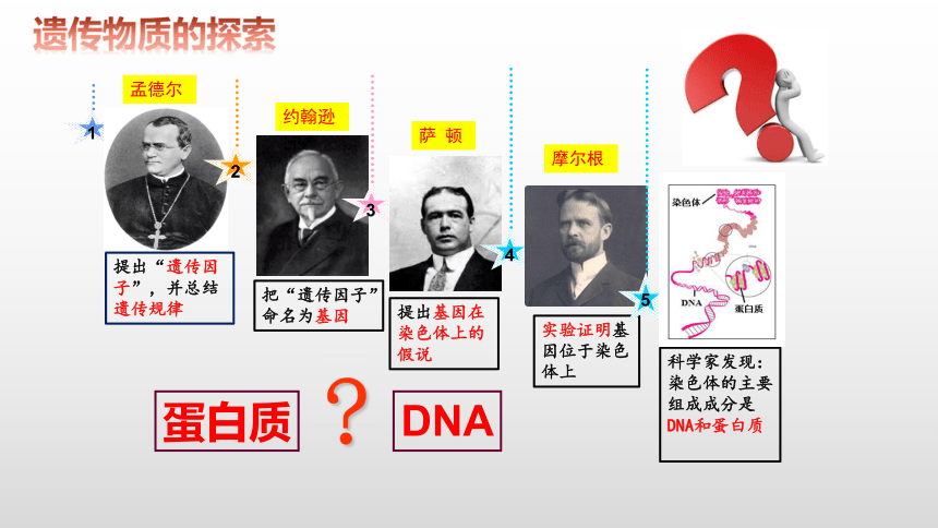 3.1  DNA是主要的遗传物质(共36张PPT)