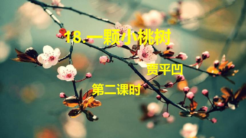 19 一颗小桃树  第2课时课件(共18张PPT)