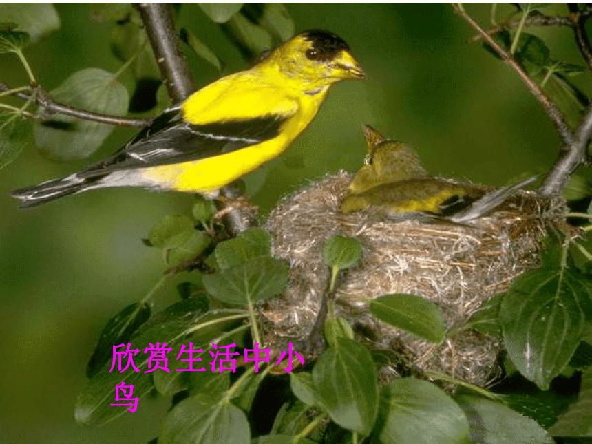 冀美版 一年级下册美术 第7课 美丽的鸟 课件(26张PPT)