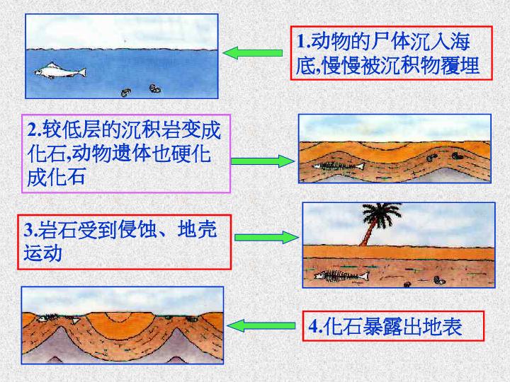 四年级下册语文课件-4.16 化石吟 语文A版 (共35张PPT)