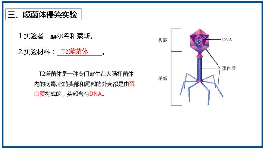 2020-2021学年高一生物人教版必修二3.1DNA是主要的遗传物质课件 (共18张ppt)